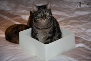 Cat trap is trapping! by BazarDeLaNature