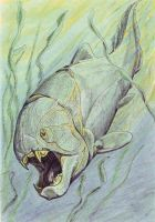 Dunkleosteus by DiBgd