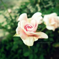 Flower2 by imad95