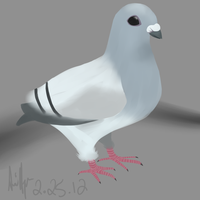 Pigeon by TheMultitool