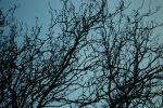 Branches Against The Sky 3 by misterwackydoodle