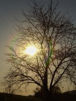 Tree and sun by Nicollaos
