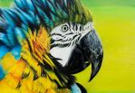 Macaw by BeeZee-Art