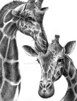 Giraffe Drawing by ALRadeck