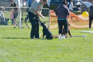 2014 Dog Festival, Try and Train by Miss-Tbones