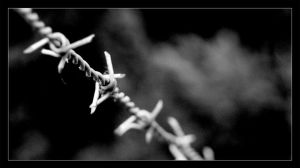 Barbed by lukeroberts