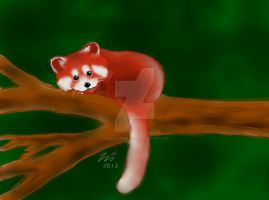 Red panda by TheGingerBandit