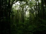 The Rainforest by enishmarati