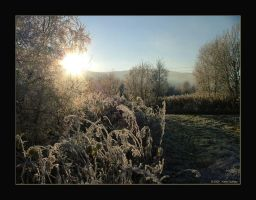 Late October Frost by auroraboralis