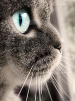 my cat by Finvara