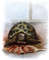 my turtle by Youngdemon