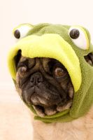 Frog Pug by dosecreative