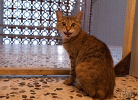 The Abused Cat by Raneem90