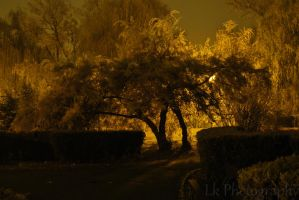 silence of the night by Lk-Photography