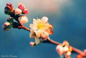 Bloom II by MyLifeThroughTheLens