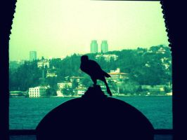 The Bird Is Watchin' You. by trepas