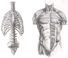 Anatomy by rrog