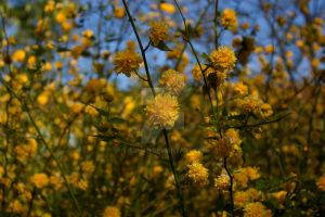 Sommer of yellow by Litohan