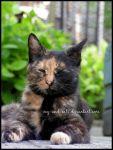 508 by evy-and-cats