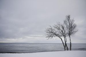Snowy Shores by chriskronen