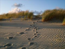 Dunes 5 by rici66
