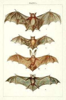 Vintage Bats by HauntingVisionsStock