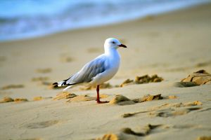 SeaGull by 08brooky80