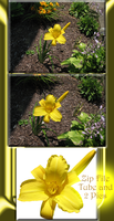 Yellow Flower Tube and 2 pic Zip File by WDWParksGal-Stock