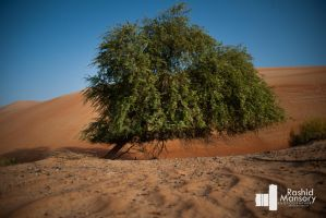Tree grow without water by MANSORY
