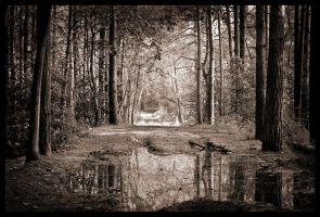 Woodland by grimleyfiendish