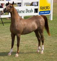 STOCK - Equitana 2013-271 by fillyrox