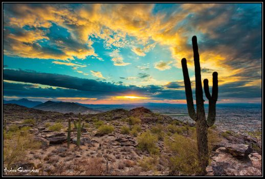 Pure AZ Gold by AndrewShoemaker