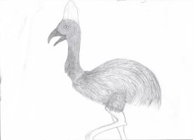 Cassowary by sable-king