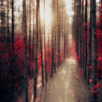 more than real by ildiko-neer