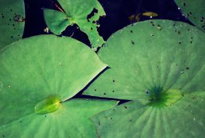 Lily Pads by PatchworkPearl