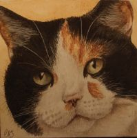 Watercolour of my cat, Torty by christinaks