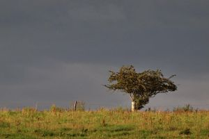 Before the storm by psychostange
