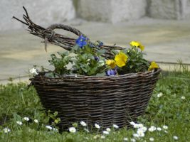 Flower Basket by sun-stock