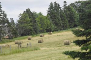 Circular Hay Bales Resting On Green, P E I 4 by Miss-Tbones