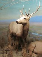Taxidermy 6 by chamberstock