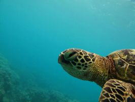 Portrait of a Sea Turtle by X5-442