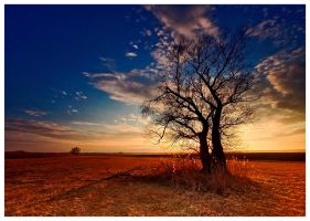 the sunset tree by arbebuk