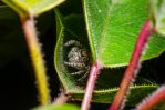 Jumping Spider seek and hide by ssabbath