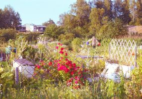allotmentgarden 2 by PhotoFrama