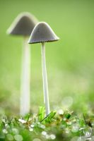Green Mushroom Morning 2 by kurtywompus