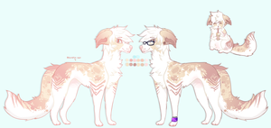[CLOSED] Border Collie Mix Adoptable by Sno-berry