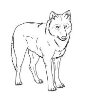 Howling Wolf Line Art by Yazora on DeviantArt