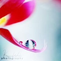 Orchid Drop_7 by KeelyWeisPhotography