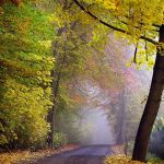 October Forest by Justine1985