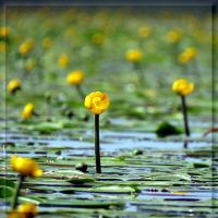 Yellow water... by Yancis